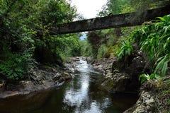 Passerelle au-dessus de fleuve dans la forêt Images libres de droits