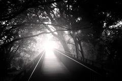 Passerelle dans la forêt Photo stock