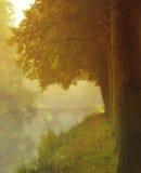 Passerelle dans le brouillard Photo stock