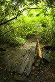 Passerelle de logarithme naturel, itinéraire aménagé pour amateurs de la nature, Mtns fumeux grand NP images stock