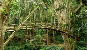 Passerelle en bambou Photographie stock libre de droits