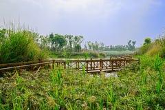 Passerelle en bois clôturée le long d'au bord du lac verdoyant en ressort ensoleillé Images libres de droits