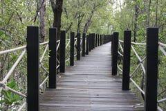 Passerelle en bois dans la forêt de palétuvier Image libre de droits