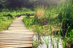Passerelle en bois de zone humide Photos libres de droits
