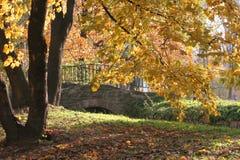 Passerelle et arbres Photo libre de droits