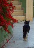 Passerelle nere lungo il percorso vicino ai fiori rossi Fotografia Stock Libera da Diritti