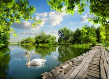 Passerelle sur le fleuve photo libre de droits