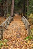 Passerelles en bois dans une forêt d'automne image libre de droits