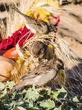 Passeri sulle varie verdure al festival del raccolto di autunno Animali, natura immagini stock libere da diritti