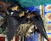 Passeriformes Стоковые Изображения RF
