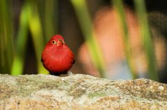 Passerine bird in aviary, South Florida Royalty Free Stock Photos