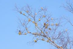 Passerine birds meeting Stock Photography