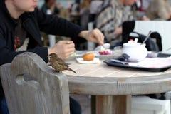 Passero in caffè Fotografia Stock Libera da Diritti