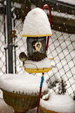 Passero di canzone sull'alimentatore dell'uccello nell'inverno fotografie stock libere da diritti