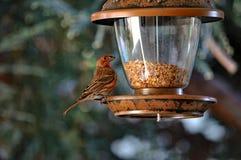 Passero e l'alimentatore dell'uccello fotografia stock