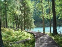 Passez le journal dans la forêt Image libre de droits