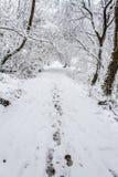 Passi attraverso neve Fotografia Stock Libera da Diritti