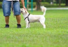 Passi dare a cane un picchiettio sulla testa immagini stock libere da diritti