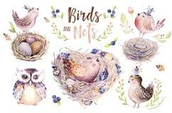 Passi l'uccello e le uova di disegno del fumetto di volo dell'acquerello di pasqua con le foglie, i rami e le piume Arte acquerel Immagini Stock Libere da Diritti