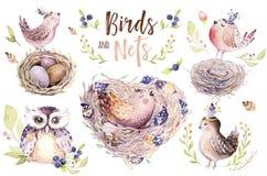 Passi l'uccello e le uova di disegno del fumetto di volo dell'acquerello di pasqua con le foglie, i rami e le piume Arte acquerel Fotografia Stock