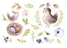Passi l'uccello e le uova di disegno del fumetto di volo dell'acquerello di pasqua con le foglie, i rami e le piume Arte acquerel Fotografia Stock Libera da Diritti