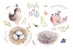 Passi l'uccello e le uova di disegno del fumetto di volo dell'acquerello di pasqua con le foglie, i rami e le piume Arte acquerel Immagine Stock