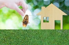 Passi la blatta della tenuta sull'icona della casa da di legno sul fondo della natura di struttura dell'erba Fotografia Stock