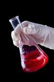 Passi la mescolatura e stringere del liquido rosso in boccetta di Erlenmayer fotografia stock libera da diritti