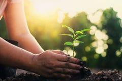 passi la piantatura l'albero piccolo e dell'alba in giardino concetto wo verde fotografie stock