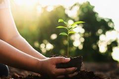 passi la piantatura l'albero piccolo e dell'alba in giardino concetto wo verde fotografia stock