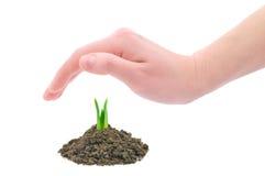Passi la protezione della pianta giovane Immagini Stock