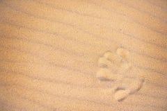 Passi la stampa nella sabbia di una spiaggia Fotografie Stock