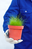 Passi la tenuta dell'erba verde conservata in vaso Fotografia Stock Libera da Diritti
