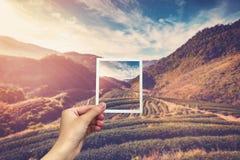 Passi la tenuta della foto istantanea ed osservi l'alba del campo del tè immagini stock