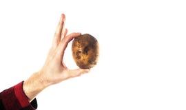 Passi la tenuta della patata su un agricoltore bianco del fondo, il vegetariano h Immagini Stock