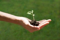 Passi la tenuta della plantula crescente su fondo bianco, la nuova vita, facente il giardinaggio, concetto dell'ambiente Fotografie Stock Libere da Diritti