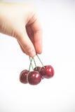 Passi la tenuta delle ciliege fresche nel fondo bianco isolato Fotografie Stock
