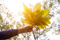 Passi la tenuta delle foglie gialle sul fondo soleggiato di giallo di autunno Fotografia Stock Libera da Diritti