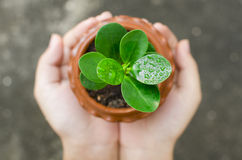 Passi la tenuta e preoccuparsi una giovane pianta verde fotografia stock libera da diritti