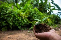 Passi quello che pianta l'albero Fotografie Stock Libere da Diritti