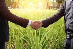 Passi stringere l'accordo dell'uomo d'affari e dell'agricoltura su riso f Fotografia Stock Libera da Diritti