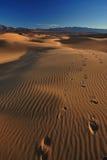 Passi sulle dune di sabbia del Mesquite, parco nazionale di Death Valley Immagini Stock Libere da Diritti