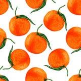 Passi a tiraggio il modello senza cuciture arancio su fondo bianco, carta da parati dell'acquerello della frutta Fotografie Stock Libere da Diritti