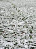 Passi in una neve bassa sopra erba Fotografia Stock Libera da Diritti