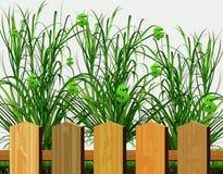 Passief inkomen De dollars groeien in de tuin stock fotografie