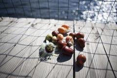 Passiflora berries on sea pier. Summer morning royalty free stock photos