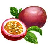 Passiflora commestibile isolata Fotografia Stock