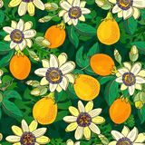 Passiflora della passiflora, frutto della passione su un fondo nero Modello senza cuciture floreale con i grandi fiori esotici lu royalty illustrazione gratis