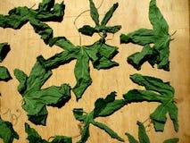 Passiflora Stock Photos