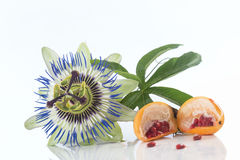 Passiflora e fruto do lcut isolado no fundo branco Foto de Stock Royalty Free